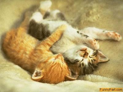 funny images of kittens. Love Kittens Funny Picture
