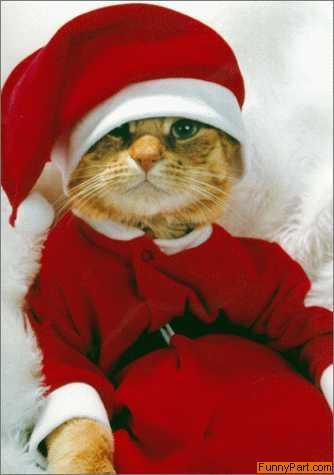 FunnyPart-com-santacat.jpg